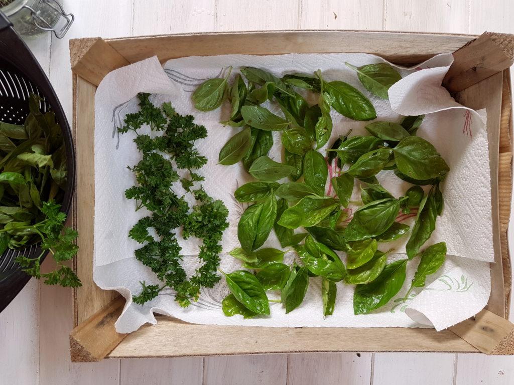 Séchage du basilic et du persil