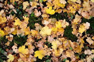zéro déchet jardin : composter les feuilles mortes