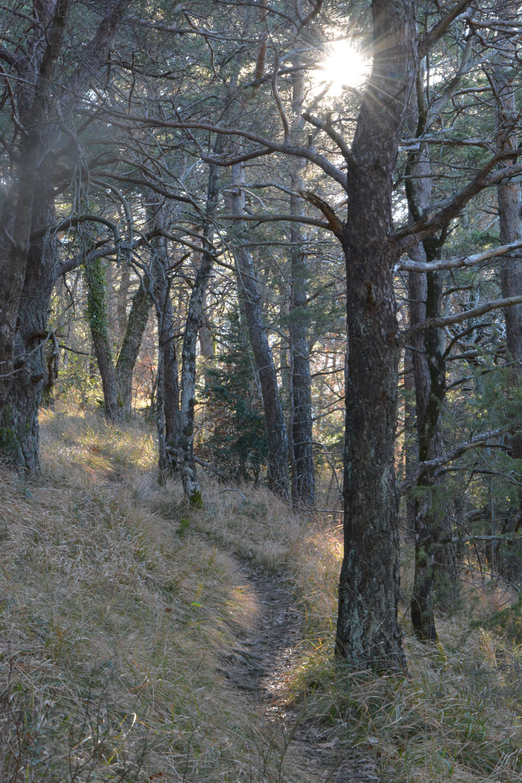 Je voudrais de la lumière, dans la forêt d'hiver…