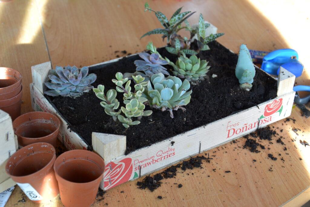 jardin_en_formation