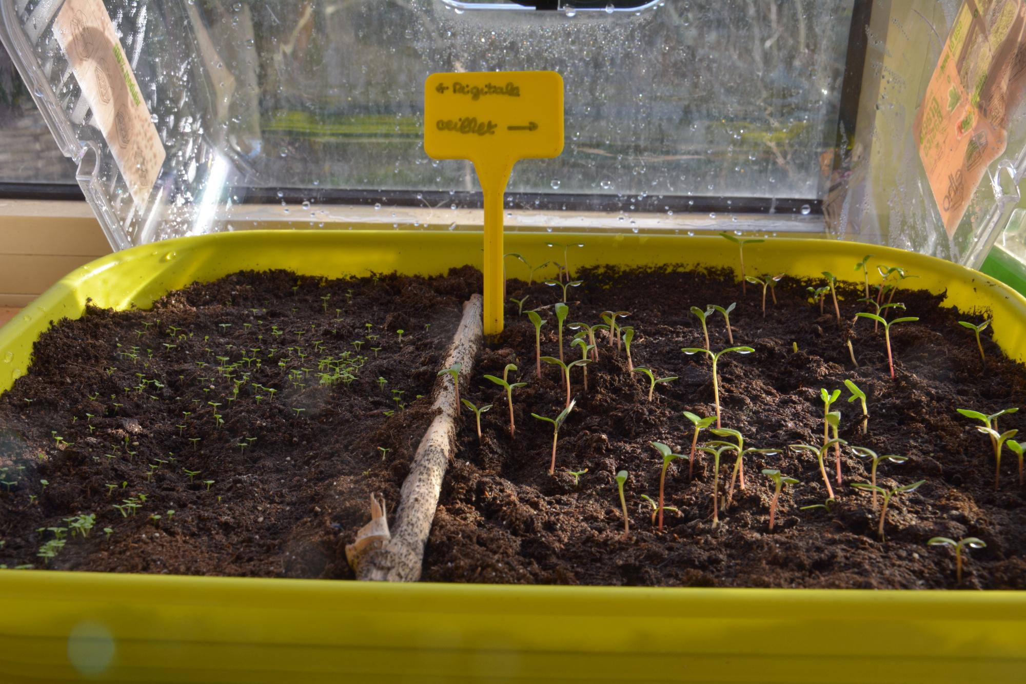 Astuces : réaliser ses propres semis de printemps