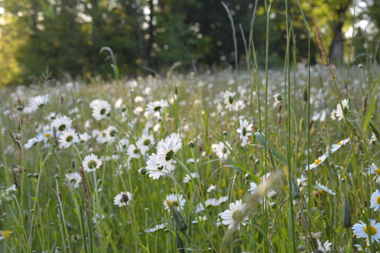 Herbier des champs et des forêts