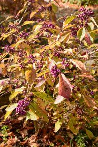 Arbre à bonbons - Fleurir à l'automne