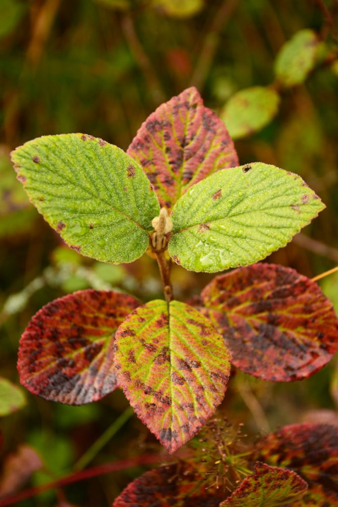 feuilles_rouge_automne