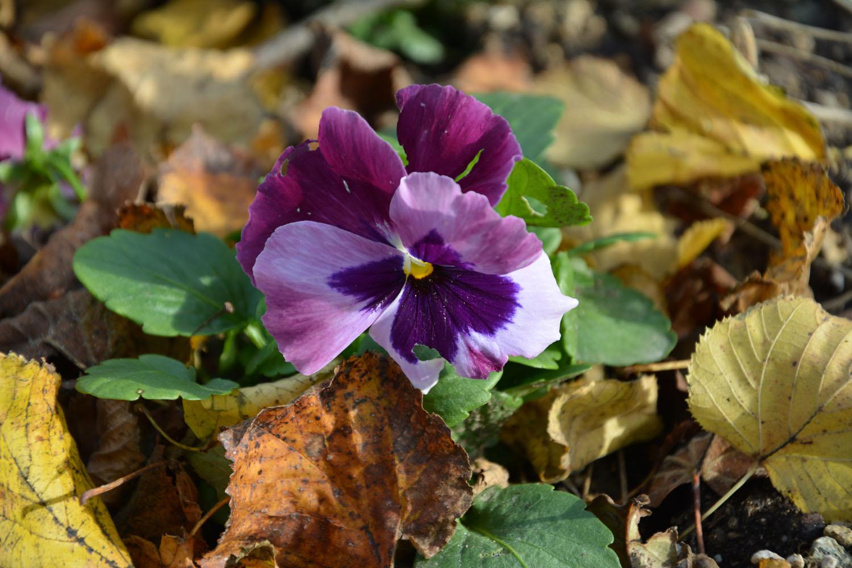 Idées pour fleurir son jardin à l\'automne - Au Fil du Thym