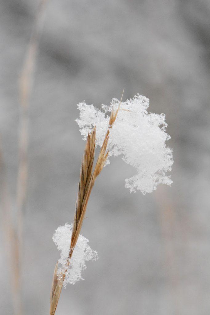macro photographie neige