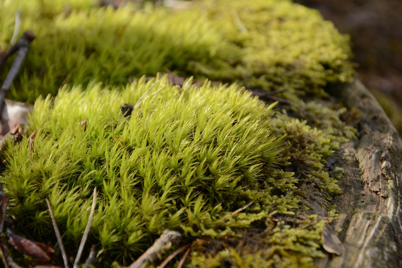 Le petit monde de la forêt…