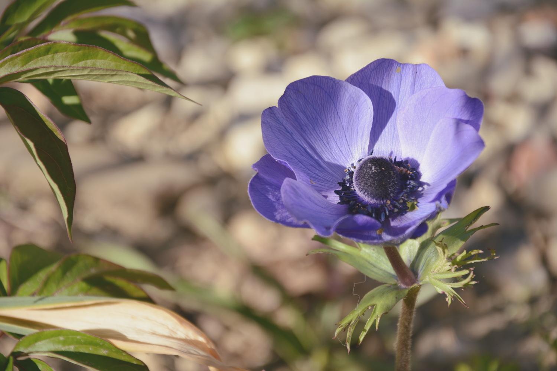 Quelques idées de fleurs originales pour le printemps
