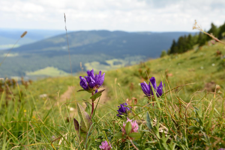 {Escapade} dans le Jura #3 :  3 idées de randonnées familiales ou sportives
