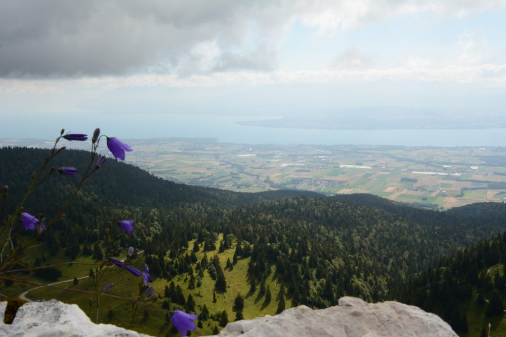 Tout en haut, nous découvrons un exceptionnel point de vue sur le Lac léman. Et oui, nous sommes en suisse !