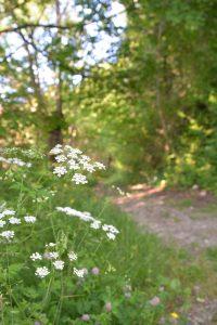 astuces randonnée nature facile - trouver les chemins de randonnée faciles