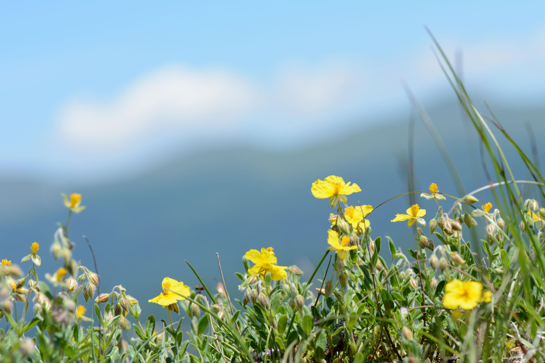Herbier Du Vercors Les Fleurs Au Fil Du Thym