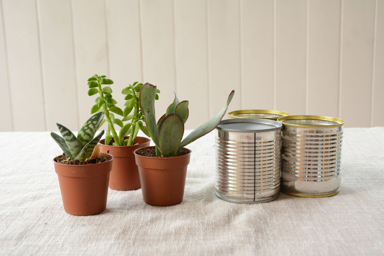 4 idées de décoration amusantes avec des plantes