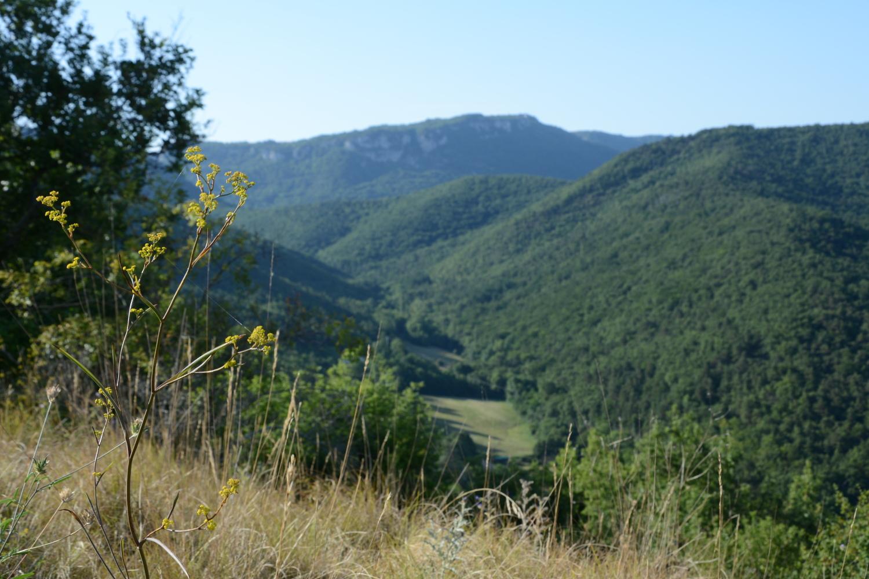 {Nature} Un été dans la Drôme