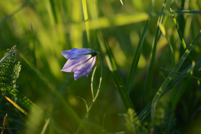 Variations violettes
