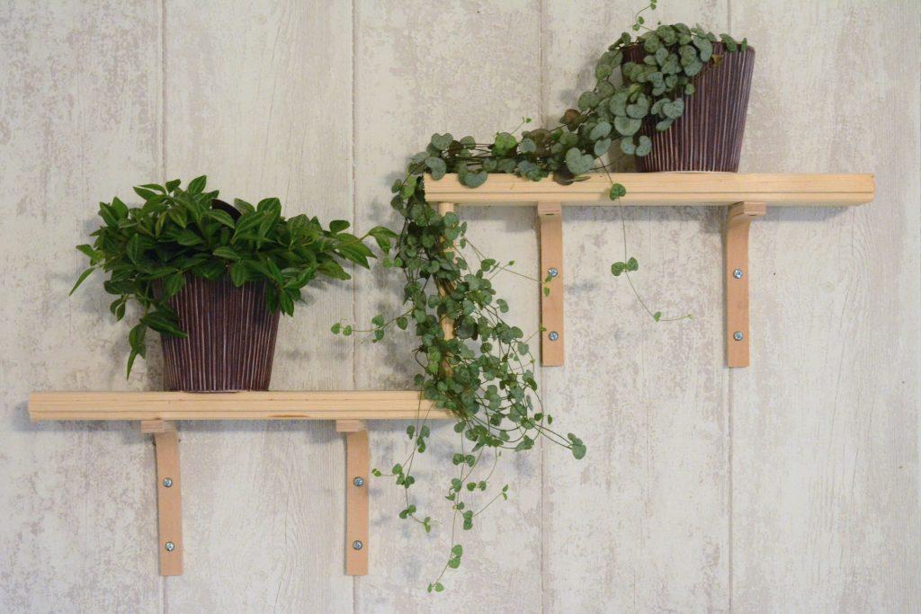 étagère à étage pour mettre en scène des plantes retombantes