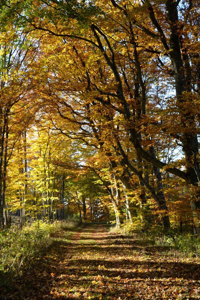 forêt vercors automne 2017