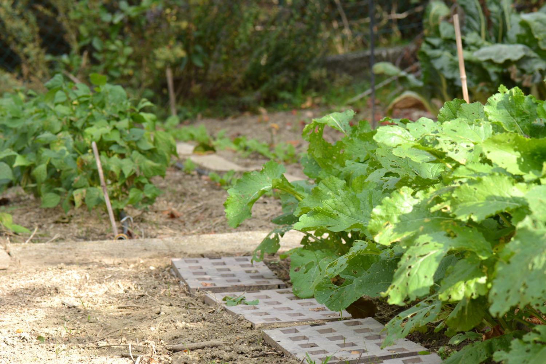 Potager débutant #3 : les plantes faciles à réussir