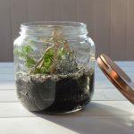 DIY terrarium bocal succulente facile