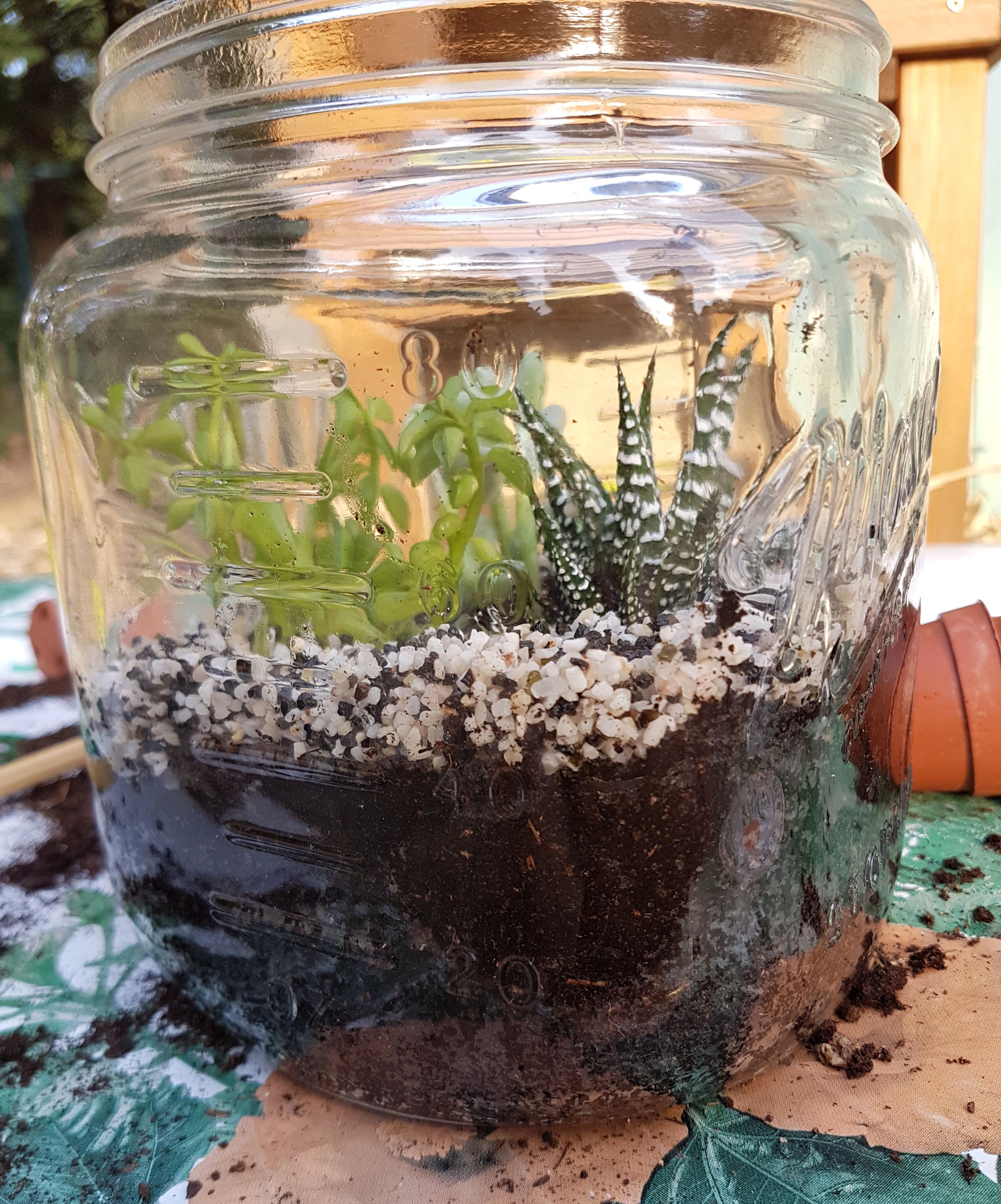 Comment Faire Un Terrarium Plante Grasse diy - un terrarium à succulentes dans un bocal - au fil du thym