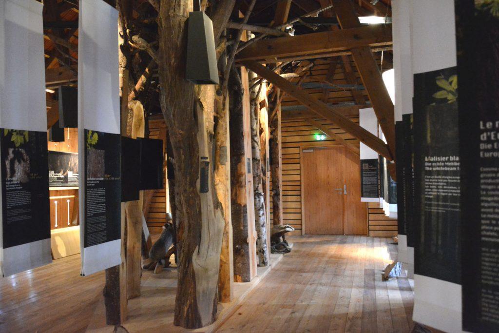 Expo temporaire sur la forêtet ses mythes