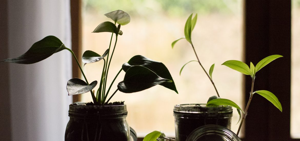 3 idées de plantes intérieur ombre & faciles à vivre - la misère