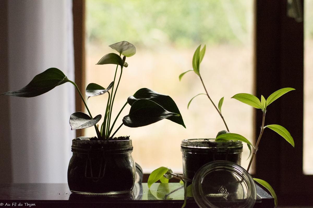 3 idées de plantes d'intérieur se plaisant à l'ombre