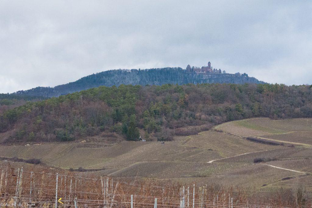 Perché sur sa colline, le château médiéval du haut Koenigsbourg