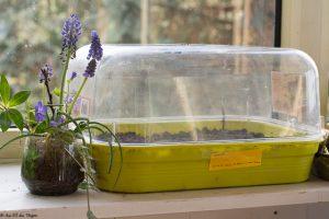 astuces r aliser ses propres semis de printemps au fil. Black Bedroom Furniture Sets. Home Design Ideas
