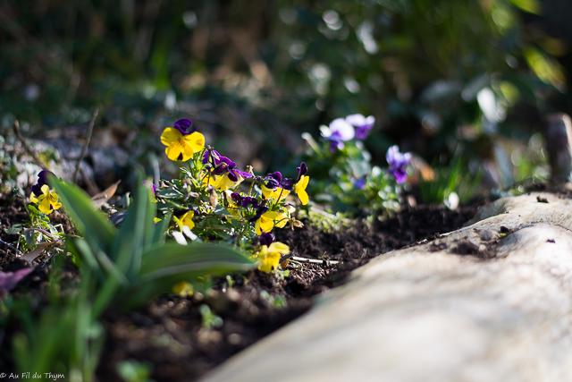Quelques astuces z ro d chet au jardin de printemps au fil du thym - Jardiniere mi ombre mi soleil ...