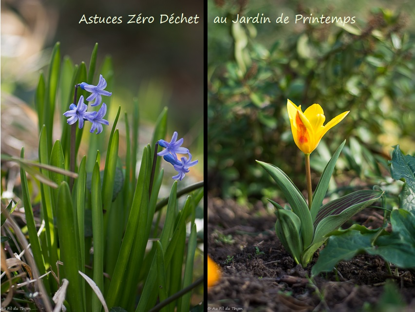 Astuces zéro déchet jardin printemps - AU Fil du Thym