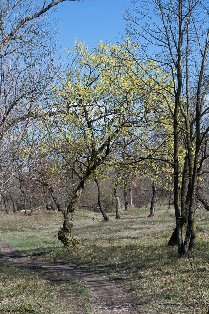 Spring is here - Arbres en fleurs