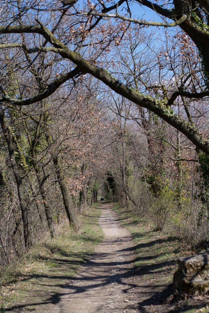 Chemin réserve Ramières au printemps - Drôme - Au Fil du Thym