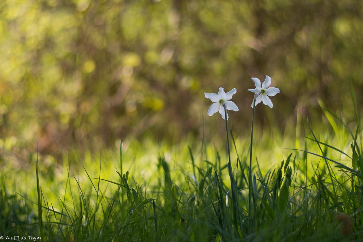 50 Nuances de printemps