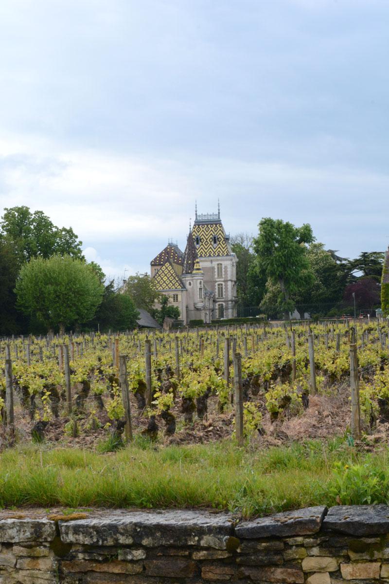 Escapade autour des grands crus de Bourgogne (Côte d'Or)