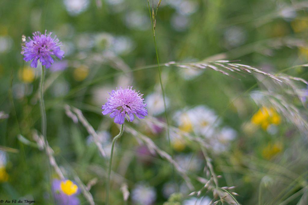 Belles fleurs champs au printemps 2018