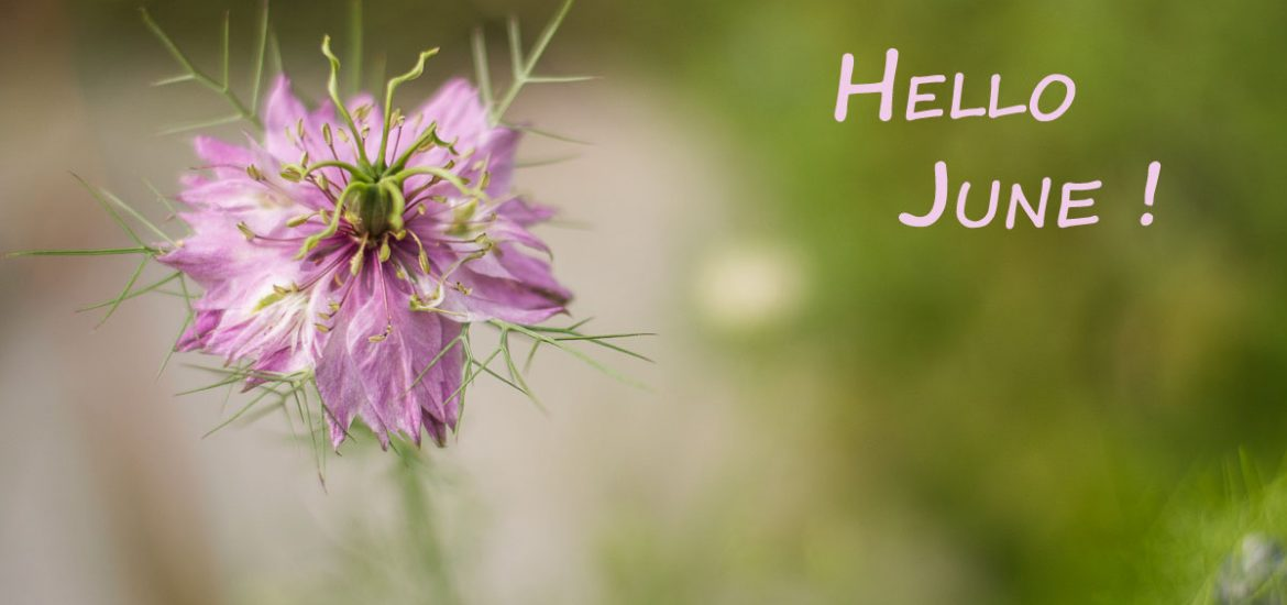 Hello Juin 2018 - Nigelle de Damas rose