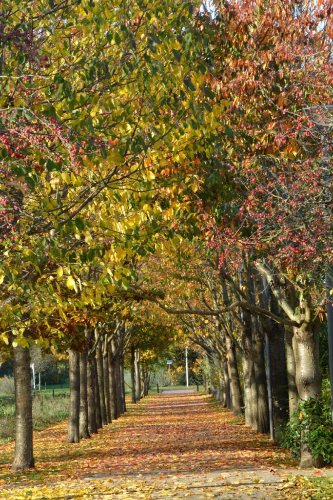 Un bon spot à promenade nature en ville : les chemins bordés d'arbres