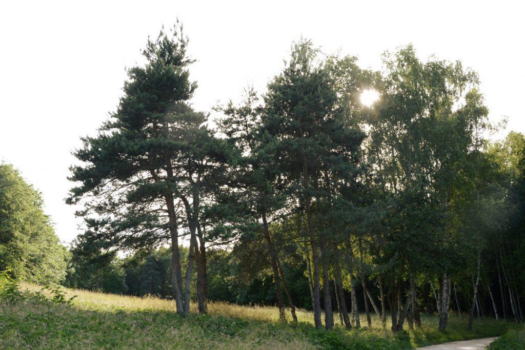 astuce randonnée nature facile - trouver les parcs aménagés
