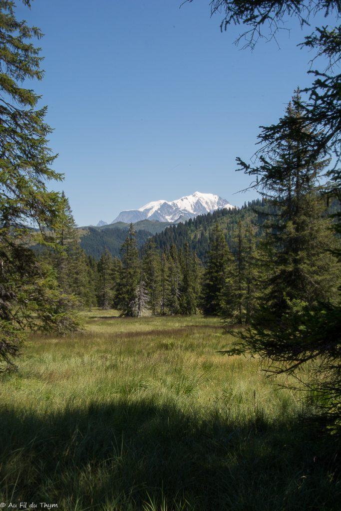 Tourbière des Saisies - Point de vue sur le Mont Blanc - Tourbière saisie - au Fil du Thym