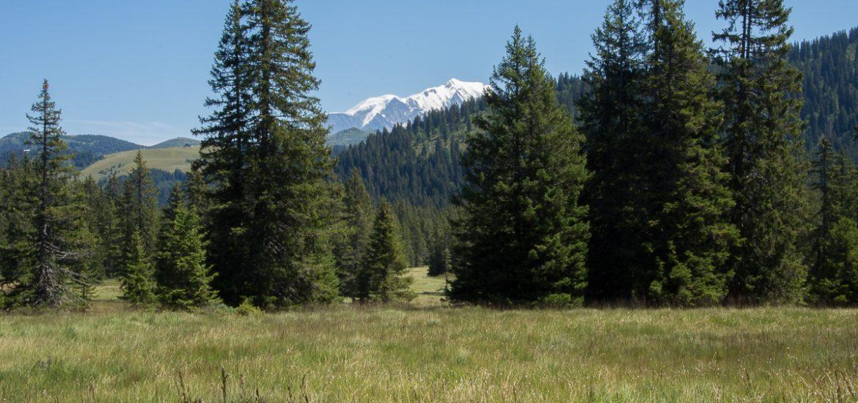 Tourbière saisie - point de vue sur le mont Blanc