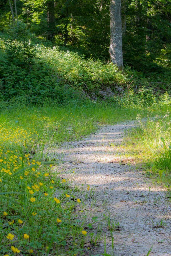 Chemin dans la forêt vercors été