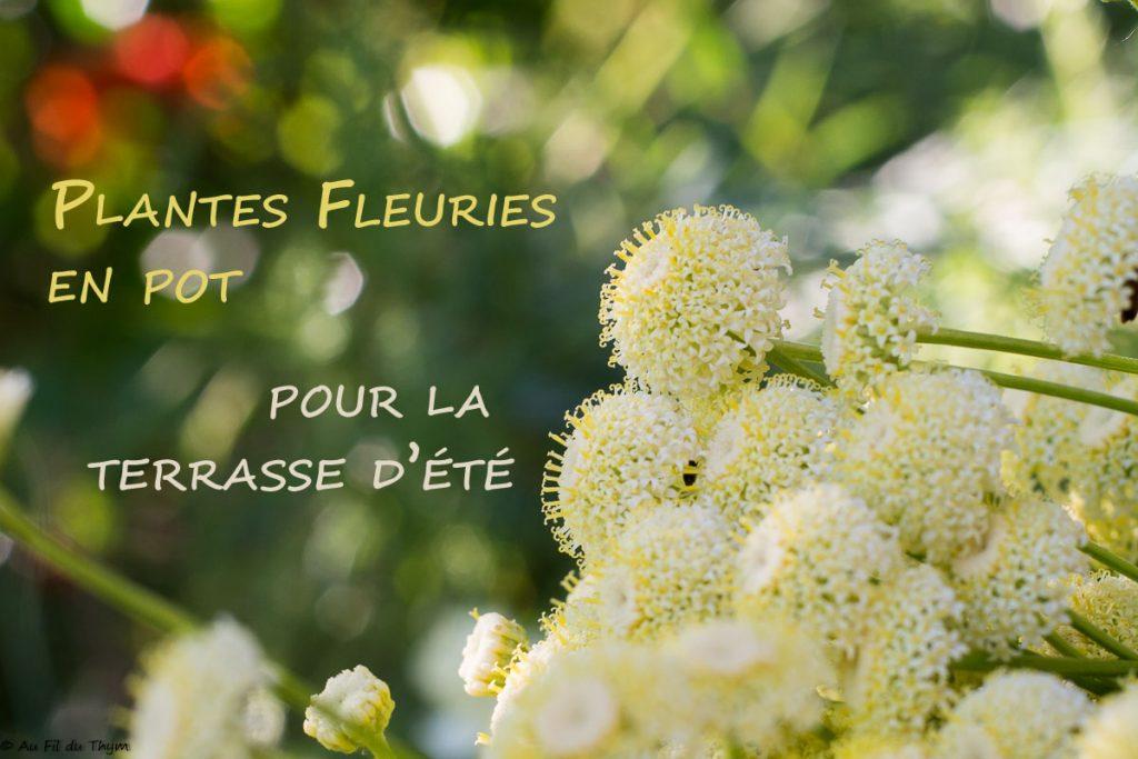 Plantes fleuries en pot pour la terrasse d'été- au fil du thym