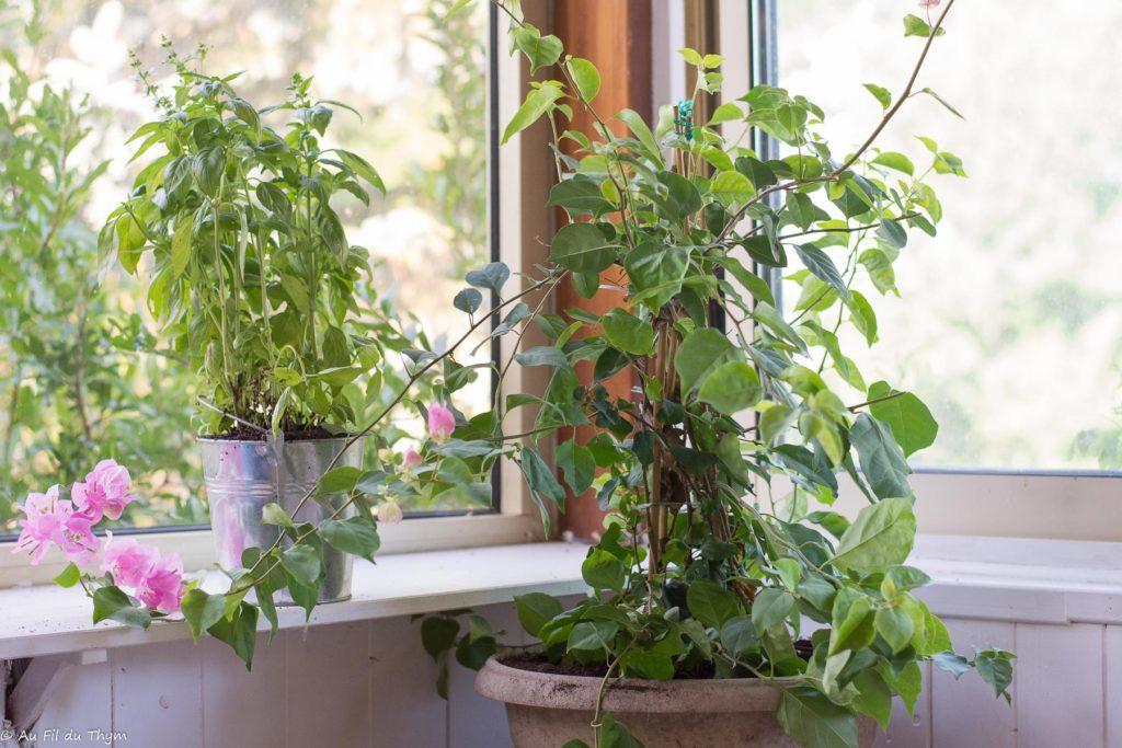 astuces rafraichir maison - végétaliser terrasses & balcons