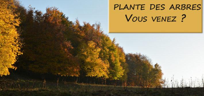 Astuces Ecologie / Planter des arbres