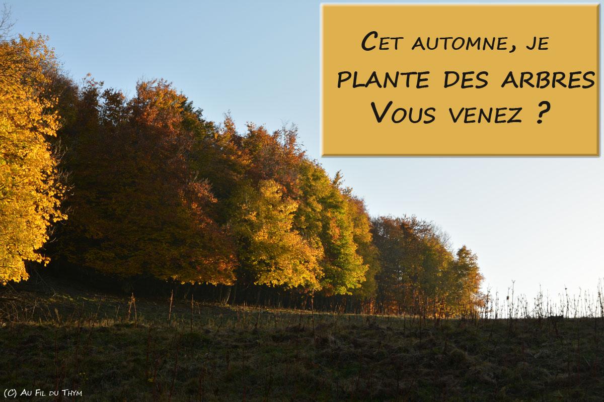 Cet automne, je plante des arbres depuis mon PC ! Vous me suivez ?