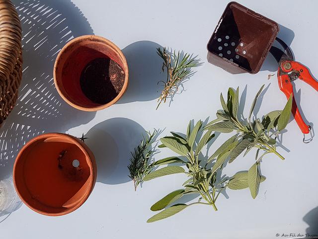 Matériel à bouturage : des plantes, des pots, du terreau..