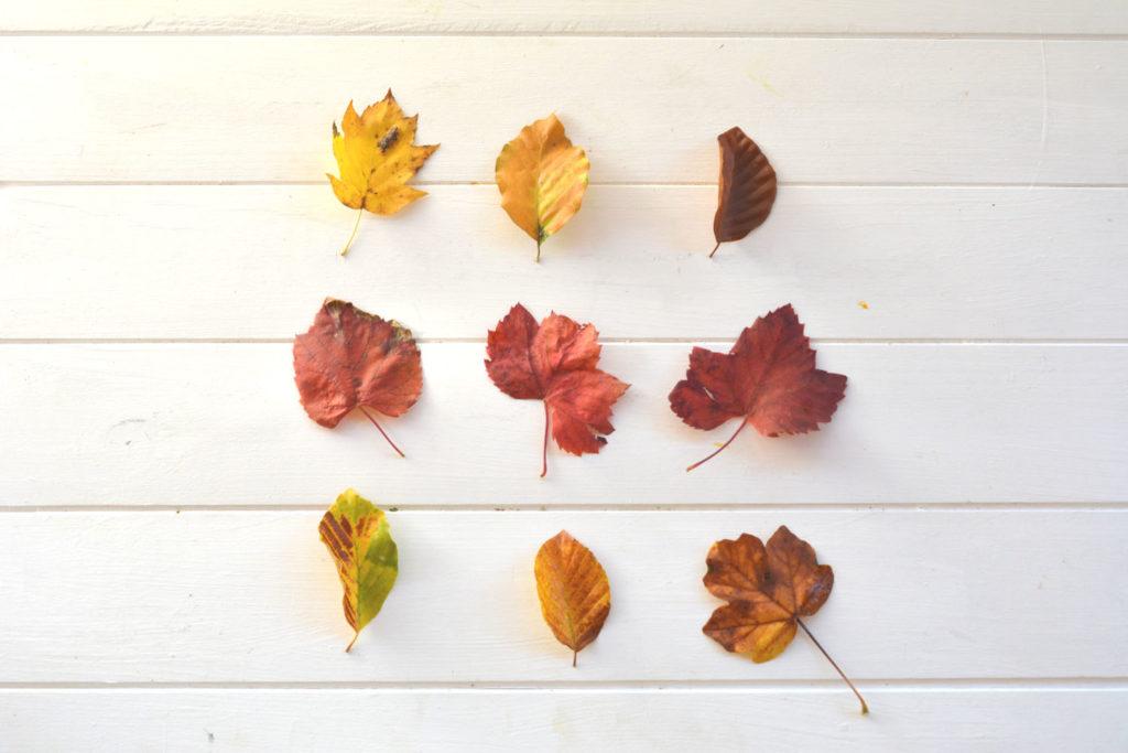 Mood Feuilles d'automne - Saurez vous les identifier ?