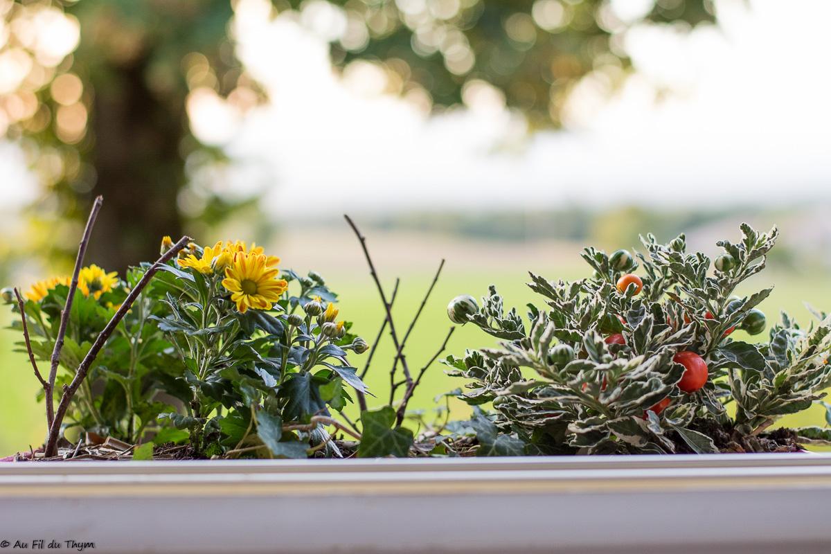 id es pour fleurir son balcon sa terrasse l 39 automne au fil du thym. Black Bedroom Furniture Sets. Home Design Ideas
