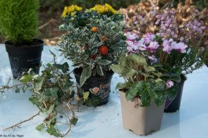Différentes plantes et fleurs pour les compositions d'automne